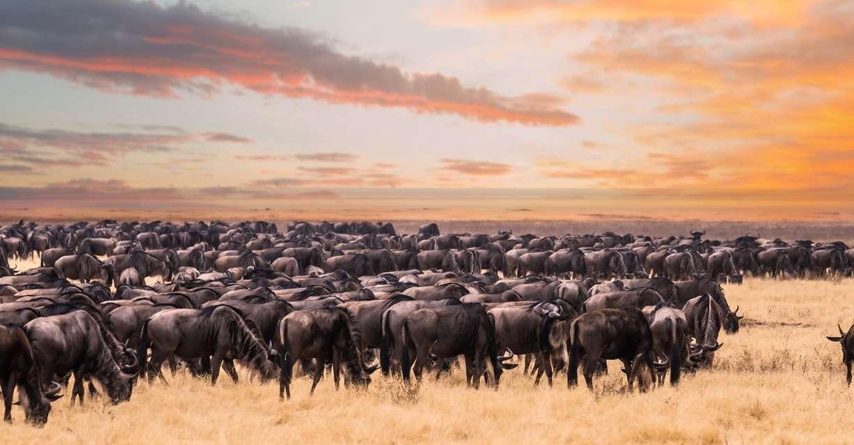 Why Visit Serengeti national park