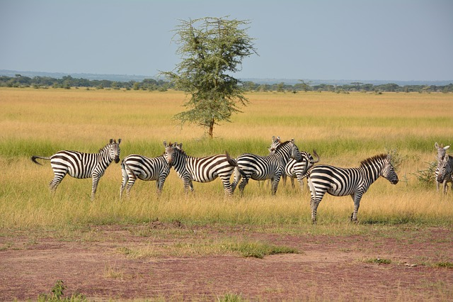Best Tanzania Tours & Travel Operators & Safari Companies and Agents