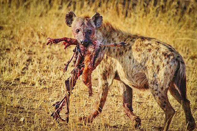 Why Visit Serengeti