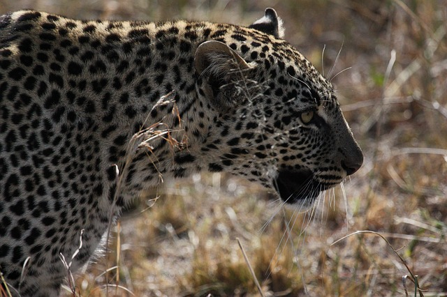 11 Days Tanzania Adventure