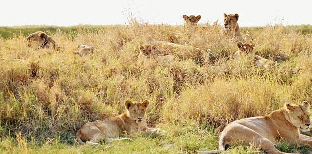 Top Things to do in Serengeti