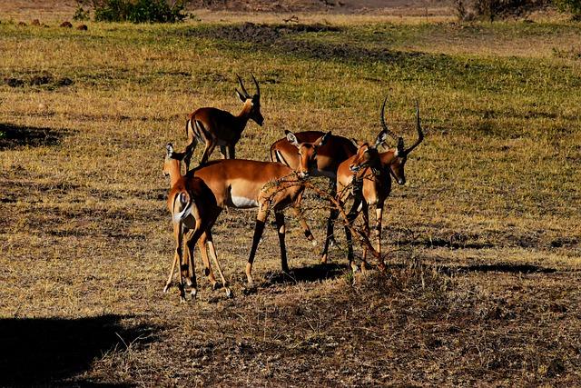 15 Days Great Tanzania Safari