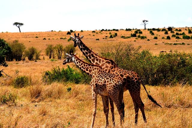 3 Days Serengeti Safaris & Ngorongoro
