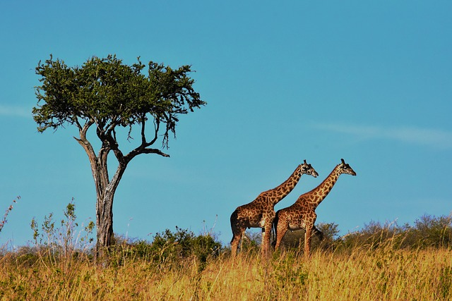 Strange Facts about Serengeti National Park