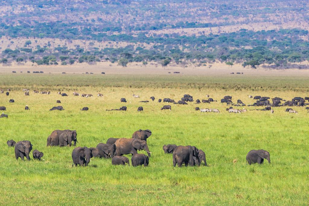 4 days tarangire and Serengeti safari