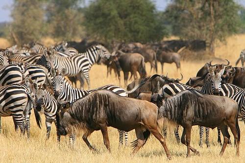 4 Days Tarangire and Serengeti