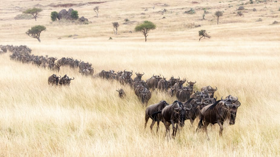 Sections of Serengeti