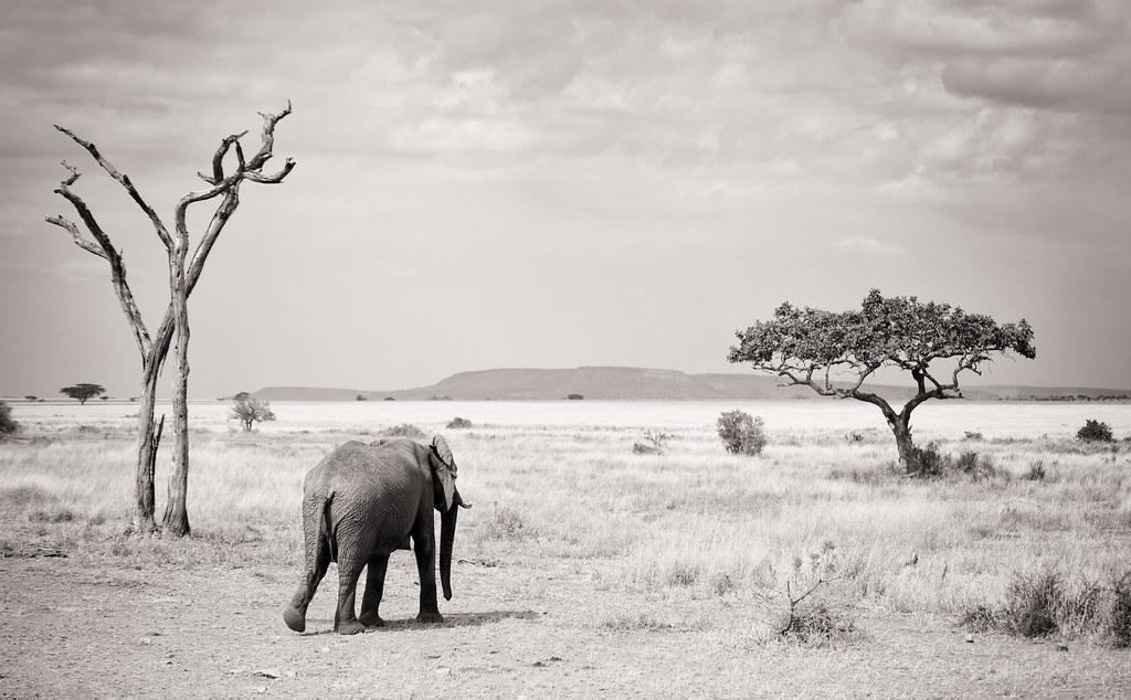 History of Serengeti national park