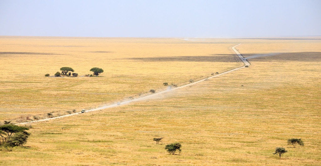 the Serengeti ecosystem