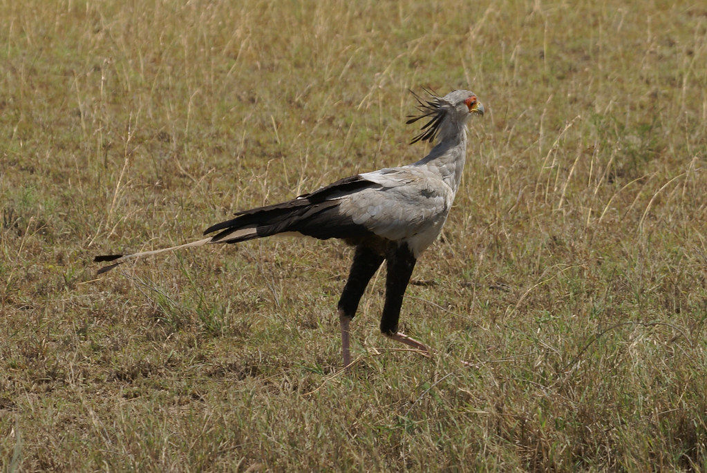 Birding in Serengeti National Park