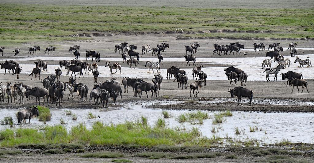 6 Days Tanzania Wildebeest Migration Safari with Balloon