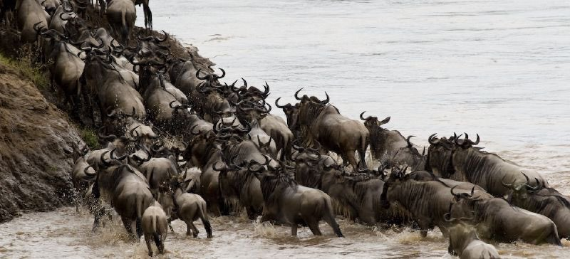Animals / Wildlife in Serengeti