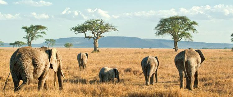 Serengeti National Park >> 10 Top Things In Serengeti National Park Serengeti National Park