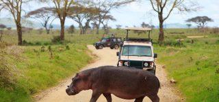 5 Days Serengeti Safaris