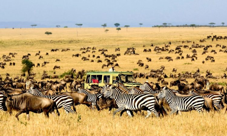 Serengeti national park wildlife safaris