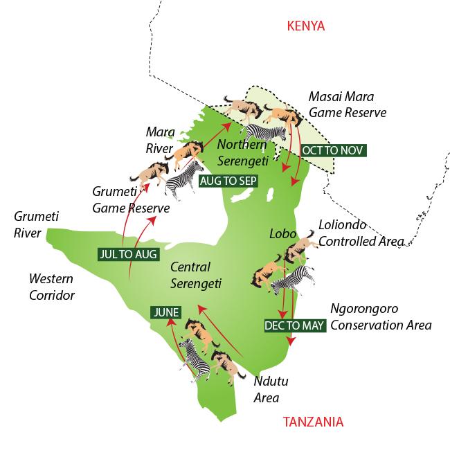 Where is the wildebeest migration now? - Serengeti ...