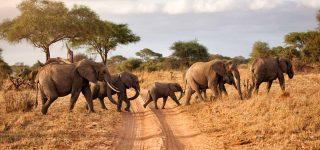 4 days Tanzania safaris