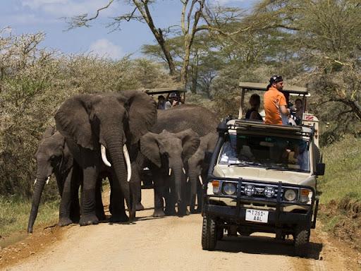 Serengeti national park Tanzania safari