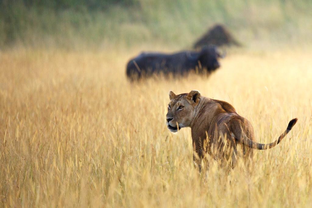 3 Days Serengeti & Ngorongoro Safari