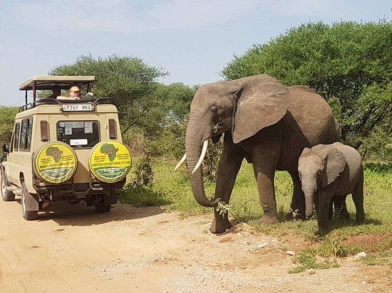 Best time to visit Serengeti National Park