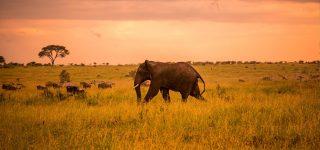 3 Days Serengeti Budget Safari