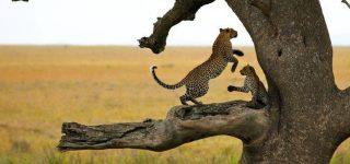 4 Days Serengeti Safari