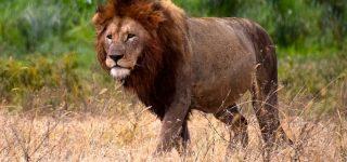 4 Days Serengeti Tarangire Safari