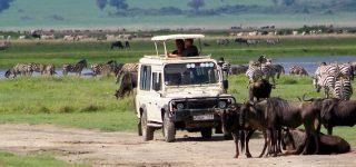 7 days Serengeti Safari