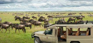 6 days Serengeti Safari