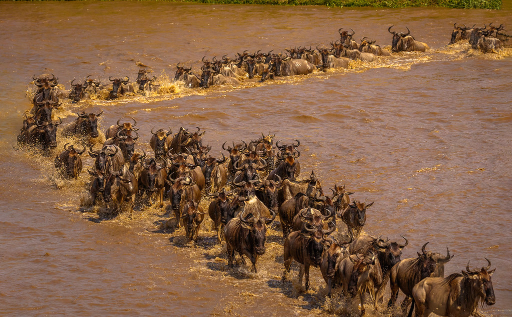 Best time to see the Migration River Crossings