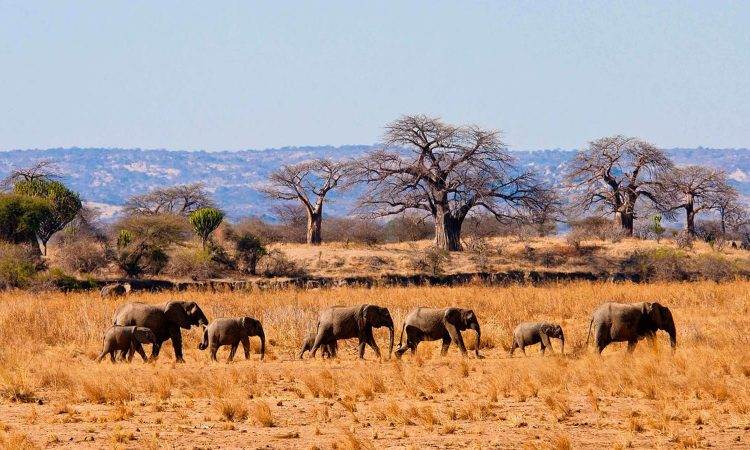 7 Days Kenya and Tanzania Safari