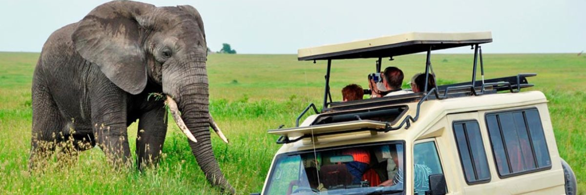 10 top things in Serengeti national par