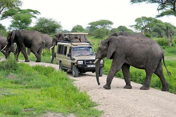 Northern Serengeti tours