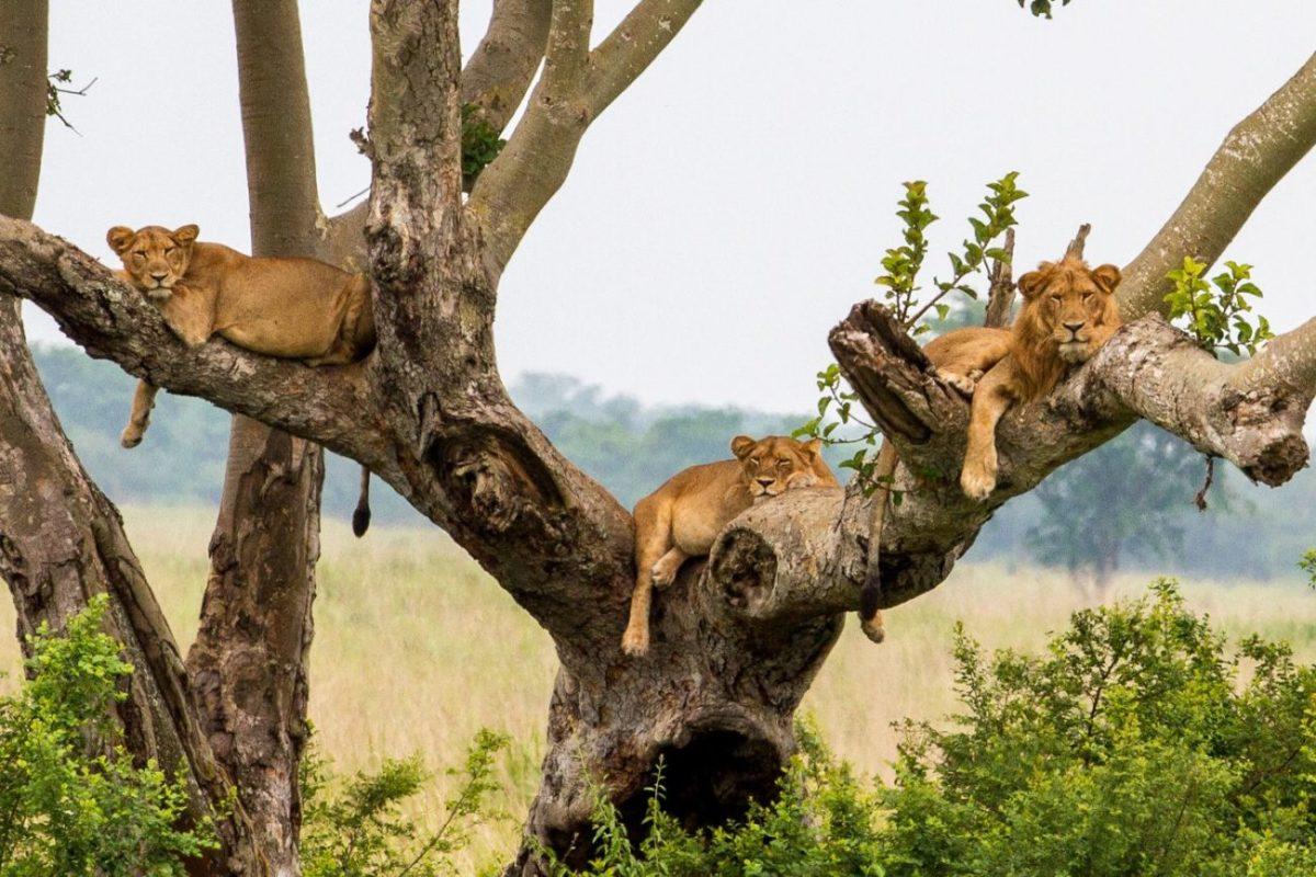 14 Days Tanzania Rwanda & Uganda Safari