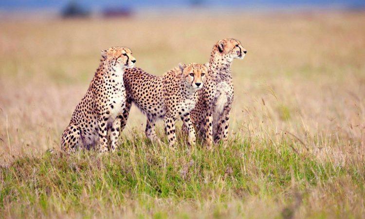 Serengeti National Park Safari Tours