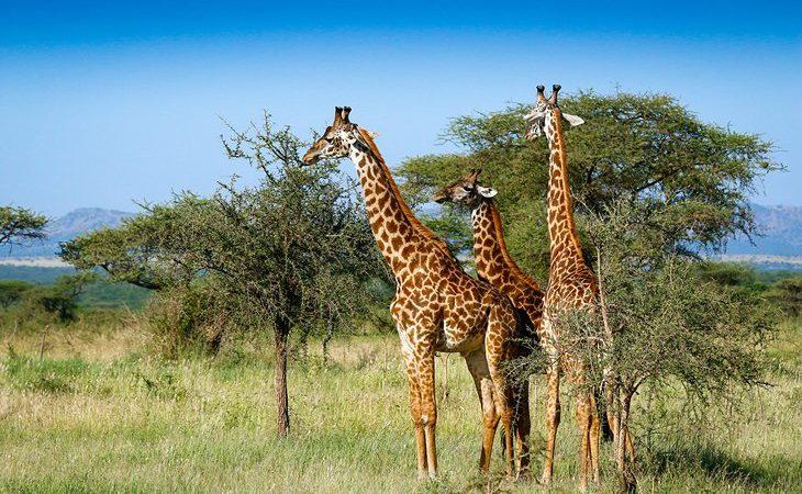 Serengeti National Park in Africa