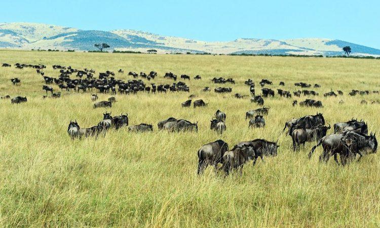 Serengeti National Park in December