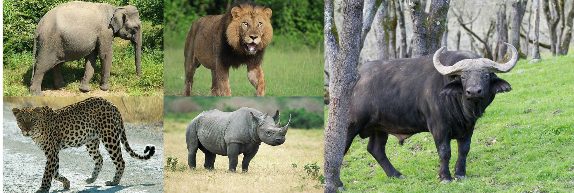 Serengeti National Park Big 5