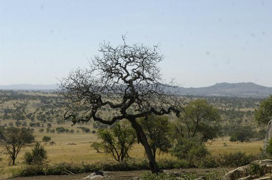 Plants in Serengeti National Park
