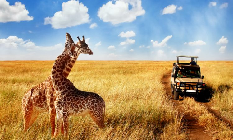 The Cost of a Tanzania Safari