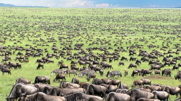 2 Days Serengeti Wildlife safari