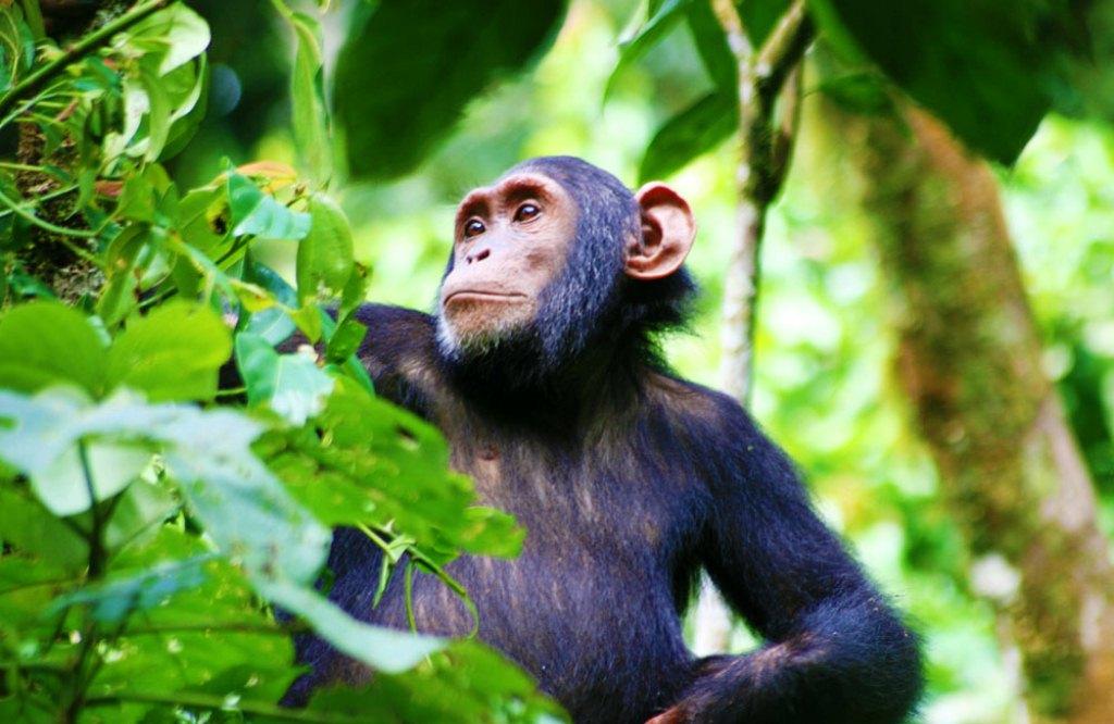 14 Days Tanzania Uganda & Rwanda Safari Tour