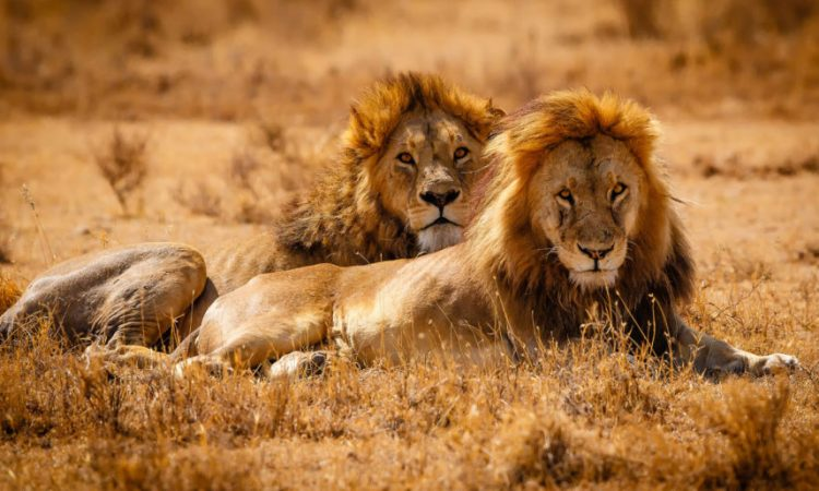14 Days East Africa Wildlife safari