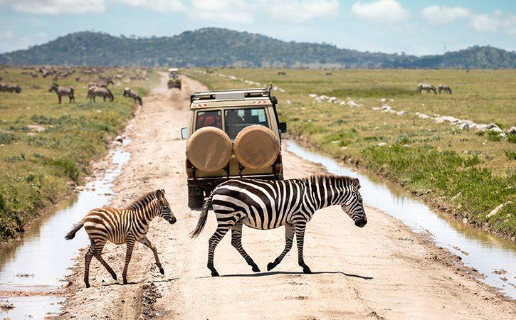 10 Days Serengeti and Mt Meru safari