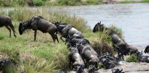 10 Days Tanzania Wildlife Safari