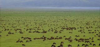Serengeti National Park Size