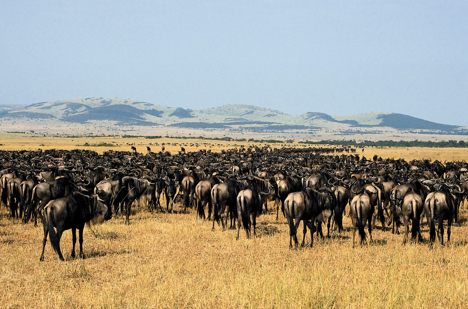 5 Facts About Serengeti National Park