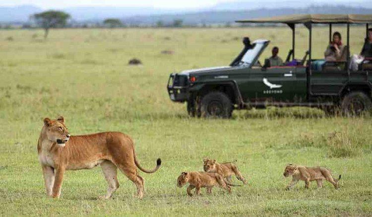 Serengeti National Park Conservation
