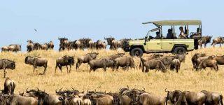 Serengeti National Park Safari