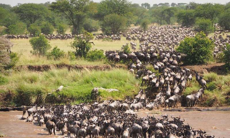Serengeti National Park as Africa's leading national park